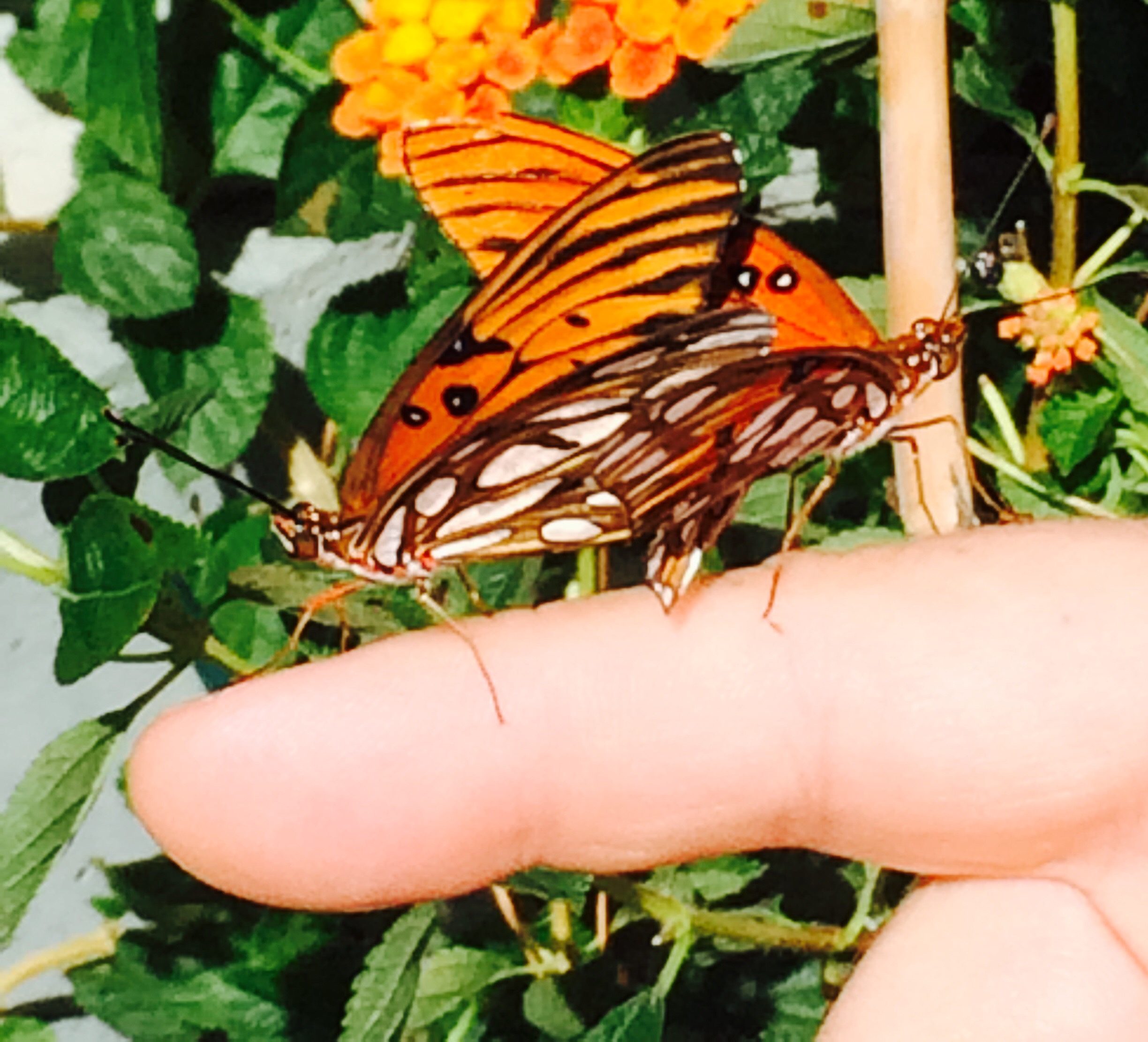Our Butterfly Garden Is Full Of Life!